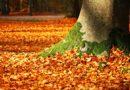 Separamos alguns lugares fora de Boston para deslumbrar da beleza do Outono